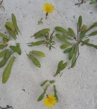 Flowers growing even in the sand!