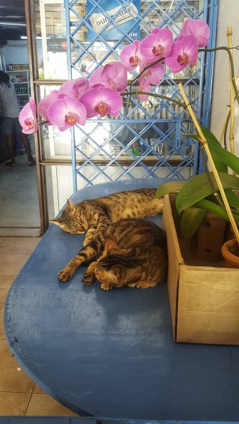 Katzen im Supermarkt Foyer